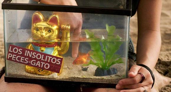 los_insolitos_peces_gato_novemagazine_7